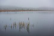"Grey day with clouds and fog over lake Maizezers with raised bog in distance, nature reserve ""Maizezers"", Vidzeme, Latvia Ⓒ Davis Ulands | davisulands.com"