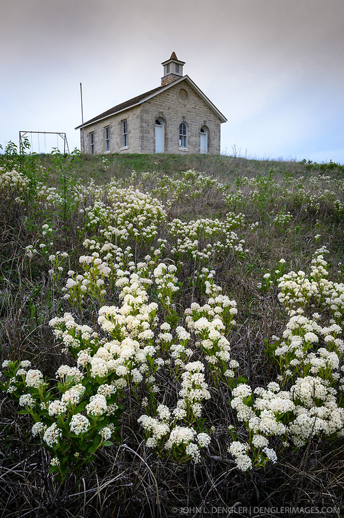 New Jersey Tea (Ceanothus americanus) blooms near the Lower Fox Creek Schoolhouse located in the Tallgrass Prairie National Preserve in the Kansas Flint Hills. New Jersey Tea was used by Native Americans for medicinal purposes, tea, and for tanning hides. The Lower Fox Creek Schoolhouse, on the National Historic Register of Historic Places, was built on land donated by cattleman Stephen F. Jones. Built in 1882, the one-room school had its first classes in 1884. Typical enrollment was between one to 19 students of all grades. The school was closed in 1930 and restored in 1968 by the Garden Clubs in the Mid-East District of Kansas. The 10,894-acre Tallgrass Prairie National Preserve is located in Chase County near the towns of Strong City and Cottonwood Falls. Less than four percent of the original 140 million acres of tallgrass prairie remains in North America. Most of the remaining tallgrass prairie is in the Flint Hills in Kansas. Tallgrass Prairie National Preserve is the only unit of the National Park Service dedicated to the preservation of the tallgrass prairie ecosystem. The Tallgrass Prairie National Preserve is co-managed with The Nature Conservancy.