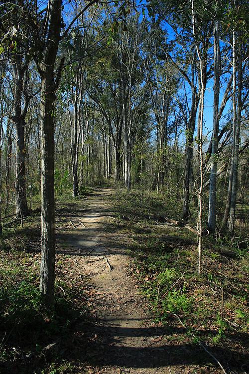 Path Through Woods, Jean Laffite, LA