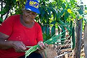 Sete Lagoas_MG, Brasil...Horta Comunitaria no Bairro Morro Vermelho. A horta e cuidada pelos proprios moradores da regiao...Community garden at the Red Hill Subdivision. The garden and looked after by the residents of the region...Foto: JOAO MARCOS ROSA / NITRO
