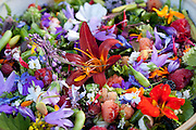 "Mixed salad with flowers from late summer. 46 different, some: 1. Adenophora Ex- Amethyst (blomst);Ladybells;<br /> 2. Aegopodium <br /> podagraria;Ground Elder;Skvallerkål<br /> 3. Agastache anisata (blomst);Anise Hyssop;Anisisop<br /> 4. Agastache anisata alba (blomst);Anise Hyssop;Anisisop<br /> 5. Allium cepa #1;Salad Onion;Vårløk<br /> 6. Allium cepa #2;Salad Onion;Vårløk<br /> 7. Allium fistulosum ""Svenskelauk"";Welsh Onion;Pipeløk<br /> 8. Allium fistulosum #1;Salad Onion;Vårløk<br /> 9. Allium fistulosum #2;Salad Onion;Vårløk<br /> 10. Allium flavum (blomst);Small Yellow Onion;Doggløk<br /> 11. Allium nutans ""Lena"" (Slizun) ;Blue Chives;Sibirsk nikkeløk<br /> 12. Anthriscus cerefolium;Chervil;Kjørvel<br /> 13. Apium graveolens #1;Celery;Selleri<br /> 14. Apium graveolens #2;Celery;Selleri<br /> 15. Artemisia dracunculus sativa;French Tarragon;Fransk estragon<br /> 16. Atriplex hortensis rubra;Orach;Rød hagemelde<br /> 17. Borago officinalis (blomst); Borage;Agurkurt<br /> 18. Borago officinalis alba (blomst); Borage;Agurkurt<br /> 19. Brassica oleracea var sabellica;Kale;Grønnkål<br /> 20. Calendula officinalis (blomst);Pot Marigold;Ringblomst<br /> 21. Chenopodium album ""Magenta"";Lamb's Quarters;Meldestokk<br /> 22. Cichorium intybus #1;Chicory;Sikkori<br /> 23. Cichorium intybus #2;Chicory;Sikkori<br /> 24. Cichorium intybus (blomst);Chicory;Sikkori<br /> 25. Commelina coelestis (blomst);Blue Spider Wort;Knollhimmelblomst/Dagblomst<br /> 26. Commelina coelestis alba (blomst);Blue Spider Wort;Knollhimmelblomst/Dagblomst<br /> 27. Cryptotaenia japonica atropurpurea;Mitsuba; Japanese Parsley;Mitsuba; Japansk Persille<br /> 28. Cucurbita pepo pepo <br /> 29. Daucus carota #1;Wild Carrot;Gulrot<br /> 31. Diplotaxis tenuifolia;Perennial Wall Rocket;Steinsennep/Flerårige Rucola<br /> 32. Fedia cornucopiae;African Valerian;Afrikanskvendelrot<br /> 33. Hablitzia tamnoides;Hablitzia;Stjernemelde; Kaukasisk Spinat<br /> 34. Hemerocallis;Day Lily;Daglilje<br /> 35. Hem"