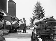 9969-2032. Unloading bags of hops into the dryer. September 9, 1935. Riverside Hop farm, owned by A.J. Ray and Son, Inc., Newberg, Oregon.