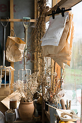 Collecting and storing seed. Envelopes hung up in the shed in Carol Klein's garden