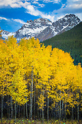 Aspens grove in the San Juan mountains of Colorado with the Ulysses Grant Peak looming above the trees