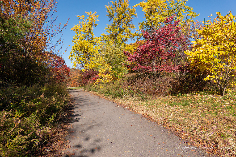 Autumn colors north of North Meadow in Central Park