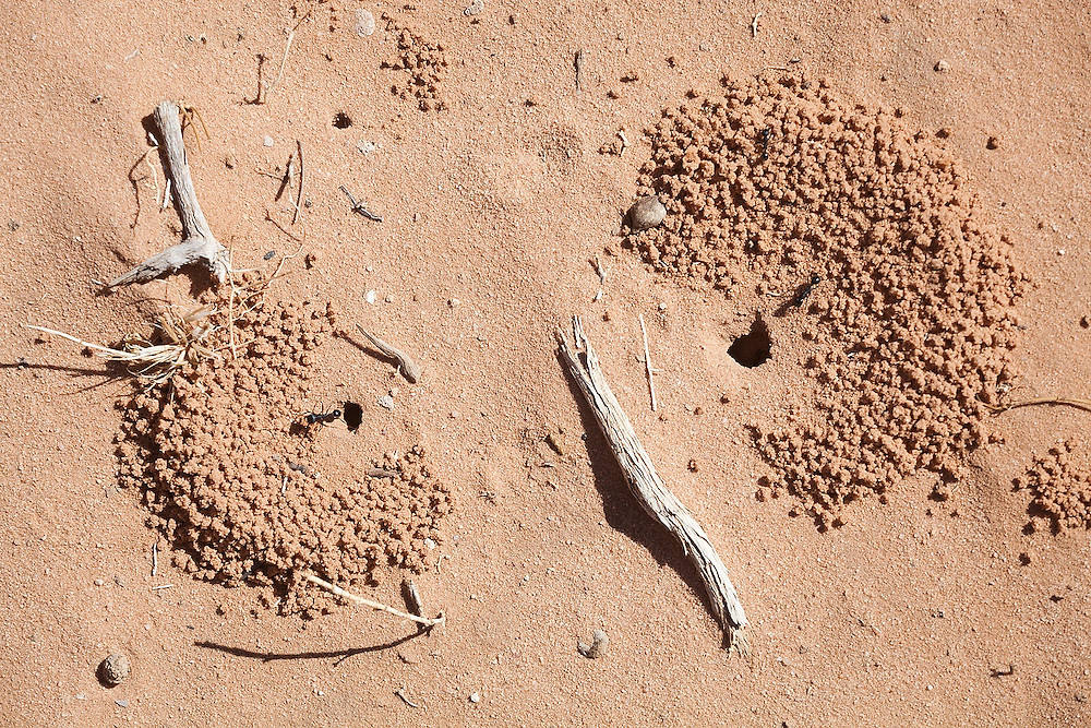 Entrances to an ant colony in the sand in Wadi Rum, Jordan.