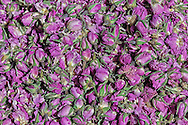 Dried rose buds in the souk of Zagora, Morocco.