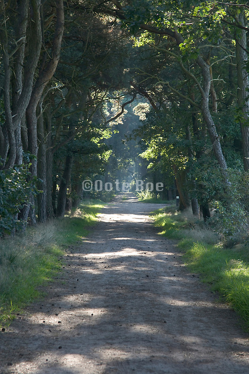 tree lanes and a sandy road