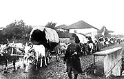 A Serbian supply train of bullock carts. Austro-Hungary invaded Serbia in July 1914.