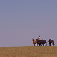 A nomadic youngster herds his father's horses in the vast southern Gobi Desert.