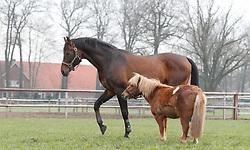Sandro Boy<br /> Sportpferde Ehning - Borken 2018<br /> © Hippo Foto - Tiffany Van Halle<br /> 02/04/2018