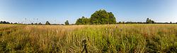 Blackland Prairie, Mary Talbot Prairie, owned by Native Prairies Association fo Texas (NPAT), Texarkana, Texas, Farmersville, Texas, USA.