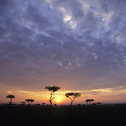 Sunset over Masai Mara National Reserve in Kenya, Africa.