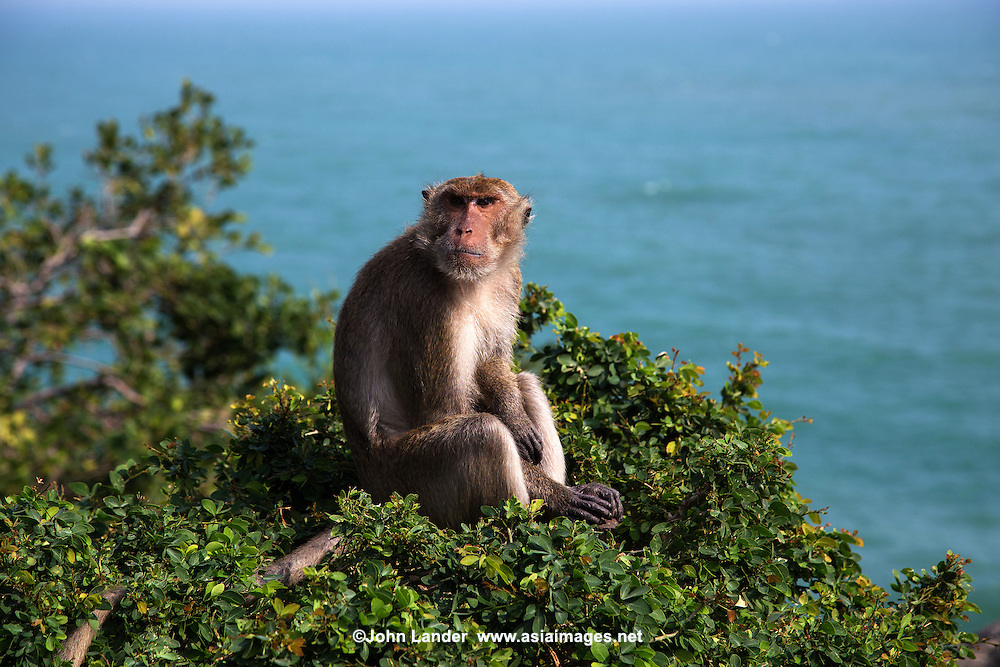 Khao Takiab is at the southern end of Hua Hin beach famous for its 20 meter tall Buddha . The hill is also know as Monkey Mountain thanks to the large numbers of macaques monkeys that live there.