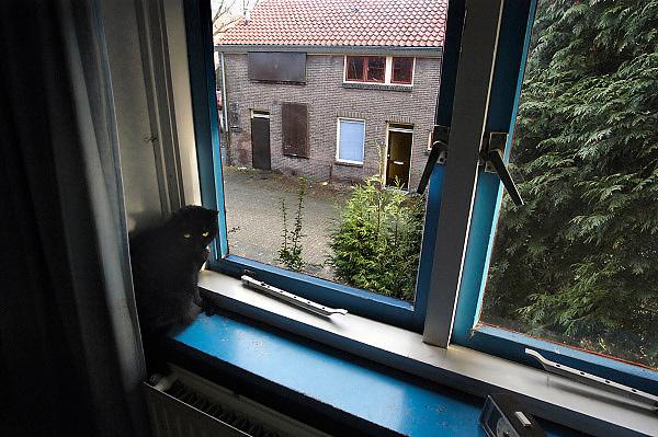 Nederland, Nijmegen, 4-2-2003..Nog een enkel huis is bewoond op de dag voordat met de sloop van dit deel van de Wolfskuil wordt begonnen.Vooroorlogse wijk, zwarte kat, stadsvernieuwing..Foto: Flip Franssen/Hollandse Hoogte