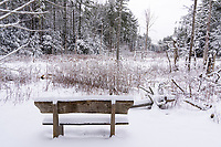 https://Duncan.co/bench-in-the-forest