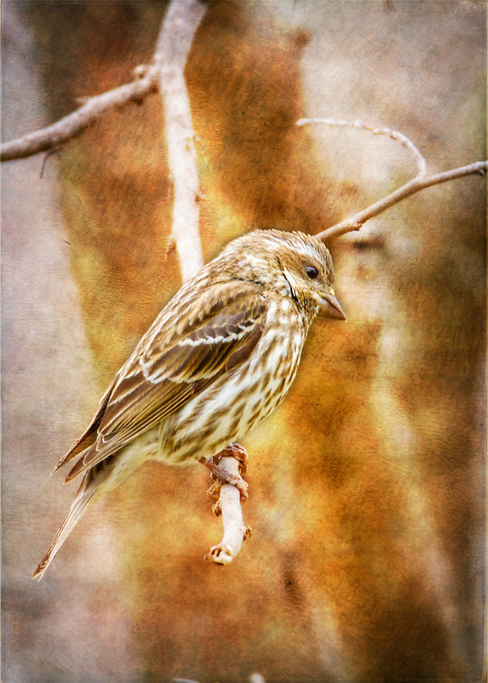 Bird Photography On A Cold, Wet, Damp and Gloomy Afternoon