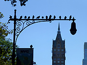 Birds perched on a old style lamppost Midtown New York City, NY, USA