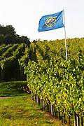 flag vineyard domaine gerard neumeyer alsace france