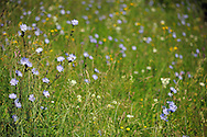 Fields where the hay is still harvested, Sinca Noua, Southern Carpathians, Romania, Rewilding Europe site