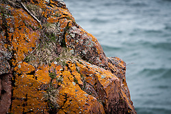 Lichens On The Lake Superior Shore Rocks