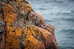 Lichens On The Lake Superior Shore Rocks