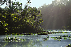 Sunlight falling on river, Orinoco River, Orinoco Delta, Venezuela