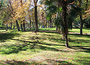 Path though trees in autumn leaf colour, El Retiro park, Madrid, Spain