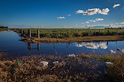 2015/03/03 – Monte Maiz, Argentina: Agro-chemical containers float after a flood next to a soy field in Monte Maiz. Floods are really common nowadays in the region, because the soil can't absorb much water since pestifies make it harder and less absorvent. Another reason is that soy needs less water than other crops, so the water under the soil its just a mere 30cm from the surface making floods common when rain falls. (Eduardo Leal)