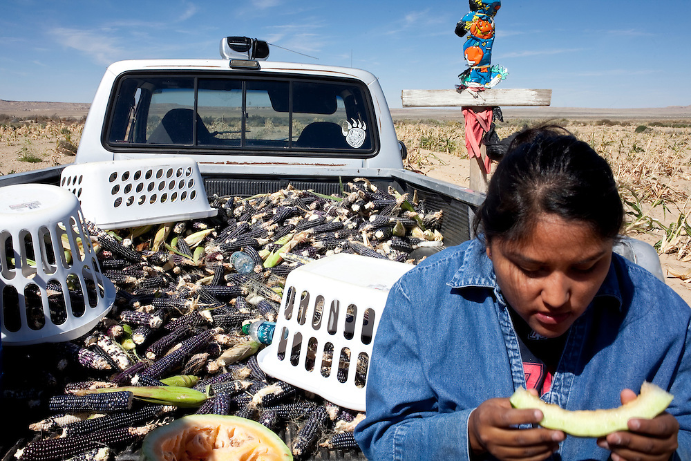 Sabrina Kyasyousia eats watermelon while taking a break from picking blue corn.  Corn is still harvested by hand.  Last years corn harvest was excellent, the family picked seven truckloads of blue corn and four truckloads of white corn.