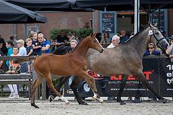 030, Re-Lenphonie<br /> KWPN Kampioenschappen 2021<br /> Ermelo <br /> © Hippo Foto - Dirk Caremans<br /> 13/08/2021