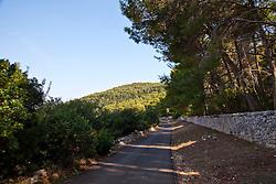 Paesaggio collinare con bosco di pini e vista mare, la vallata presenta come vegetazione alberi di olivo e fichi d'india.