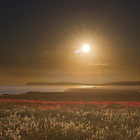 The late sun illuminates a field of poppies. Taken just outside Chale, on a glorious summers evening looking along the south west coast of the Isle of Wight towards Tennyson Down in the distance.<br />