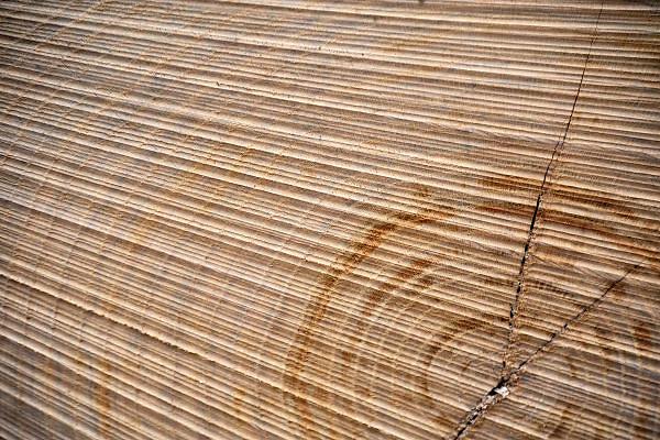 Nederland, Leur, 4-3-2012Een stapel gekapte boomstammen liggen klaar voor transport. De jaarringen zijn goed te zien.Foto: Flip Franssen/Hollandse Hoogte