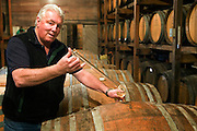 Stony Hill Winery, St. Helena, CA (Napa Valley). Mike Chelini, winemaker extracts a sample of white wine with a glass siphoning vessel called a wine thief. Stony Hill Winery is known for producing fine white wines which are aged in oak barrels that have been used for as many as 30 years, thereby not adding much oak flavor at all to the wine. MODEL RELEASED.