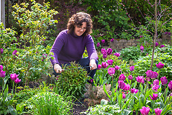 Putting metal link plant supports for perennials ( phlox ) into a border in spring
