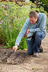Sowing hardy annuals in drills in a border outside