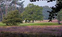 HILVERSUM - green hole 1,  Hilversumsche Golf Club, COPYRIGHT  KOEN SUYK