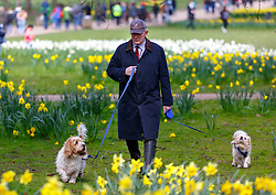© Licensed to London News Pictures. 31/03/2016. London, UK. A man walking his dogs whilst people enjoying sunshine in Green Park in central London on Thursday, 31 March 2016. Photo credit: Tolga Akmen/LNP