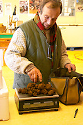 Eric Jaumard, the truffle hunter weighing The morning's truffle harvest at La Truffe de Ventoux truffle farm 740 grams, Vaucluse, Rhone, Provence, France