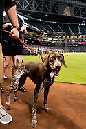 PHOENIX, AZ - MAY 6: The Arizona Diamondbacks host a dog parade for Bark at the Park prior to a game against the Astros at Chase Field in Phoenix, Arizona. (Photo by Sarah Sachs/Arizona Diamondbacks)