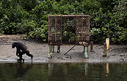 March 9, 2016 - Washington, DC, U.S - A former research chimp walks past cage that formerly housed them for decades of experimentation. HSUS and NYBC came to an agreement recently after years of discussion about the care of research chimps NYBC abandoned in Liberia.  In March 2016, a team from Humane Society of the United States visits Liberia in West Africa to view situation with research chimpanzees abandoned by New York Blood Center, which stopped all funding for food and water and also refused to pay for their caregivers who used their own meager finances to continue feeding them. They now live on six islands serving as a sanctuary run by Jenny and Jim Desmond.  The HSUS has stepped in to assist and improve the dire situation in which the chimpanzees were literally left to die if not for the heroic efforts of their original caregivers who had worked for New York Blood Center and were abandoned as well. Photo by Carol Guzy/Freelance for HSUS March 9, 2016 (Credit Image: © Carol Guzy via ZUMA Wire)