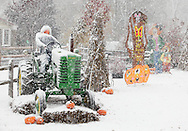 Middletown, New York - Halloween decorations, including a scarecrow on a farm tractor, are covered in snow during a snowstorm on Oct. 29, 2011.