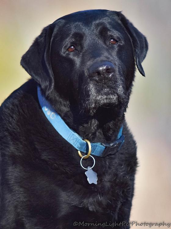 """Oscar"", Outdoor Pet Portrait"