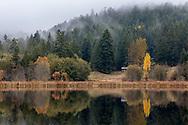 Reflections of fall foliage along the shore of Blackburn Lake on Salt Spring Island, British Columbia, Canada