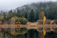 Reflections of fall foliage along the shore of Blackburn Lake on Salt Spring Island, British Columbia, Canada