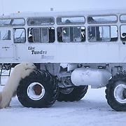 Polar bear (Ursus maritimus) leaning on the tire of a tundra buggy used to photograph polar bears. Canada