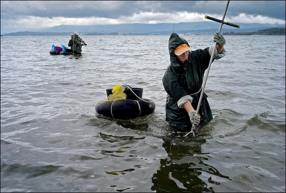 Galician mariscaderos (shellfish-gatherers)