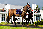 Aquadabra ridden by Nicola Currie and trained by Christopher Mason in the F45 Bath No Contract Required Handicap race.  - Ryan Hiscott/JMP - 06/05/2019 - PR - Bath Racecourse- Bath, England - Kids Takeover Day - Monday 6th April 2019