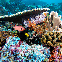 Coral Bleaching, Maldives